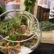 Dirt terrarium at CultureMap Holiday Pop-up Shop 2014