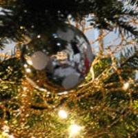 News_Amber Ambrose_Christmas tree