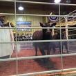 44 Farms auction