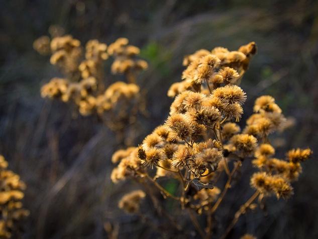 Photo of dried wildflowers
