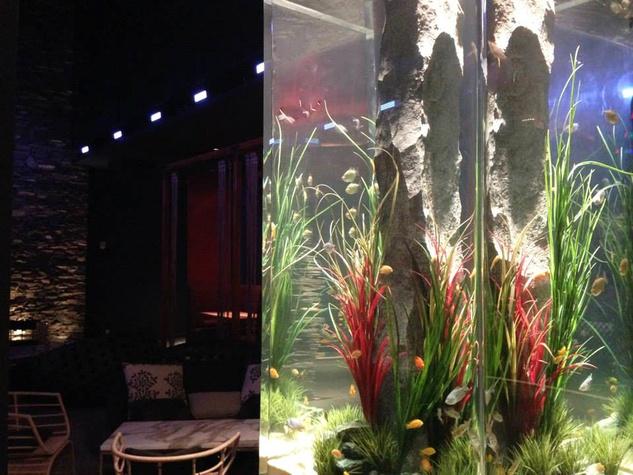 Fish & The Knife Sushi Bar and Lounge February 2014 fish tank