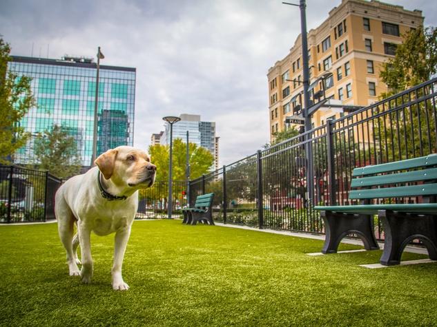 SkyHouse Houston dog park