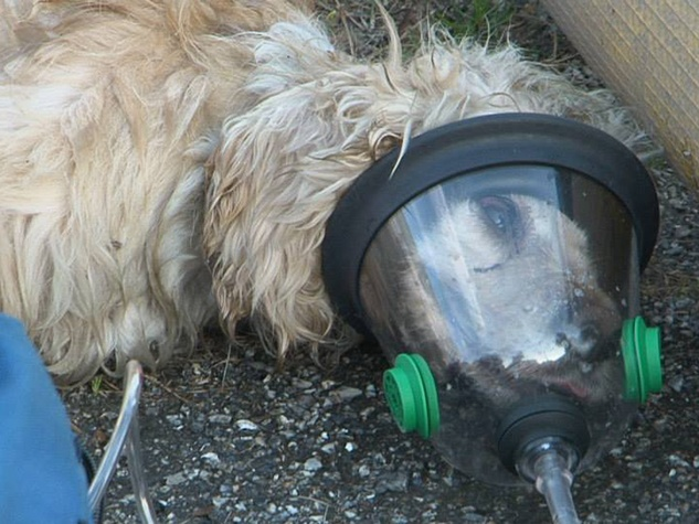 Pawz for a Cause oxygen masks for pets July 2014