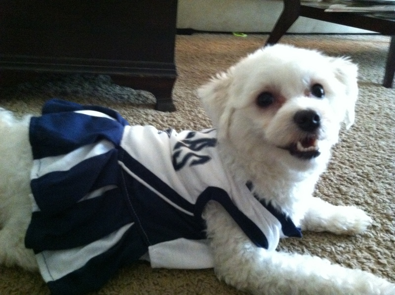 Dog in Dallas Cowboys cheerleader costume