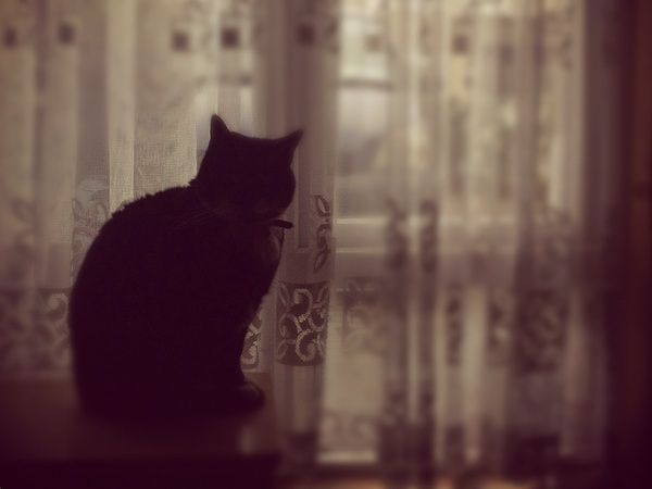 cat, silhouette, window, curtains