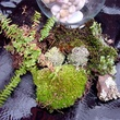 Moss of the Month Club
