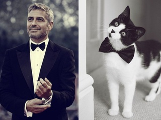 George Clooney and a cat