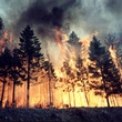 News_wildfire_trees