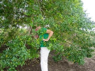 News_Jane Howze_golf etiquette_trees