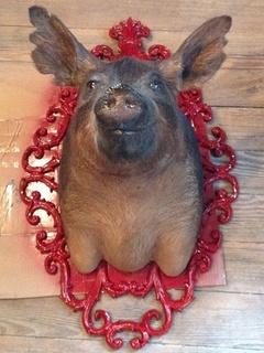 Austin photo: News_Matt McGinnis_Banger's_Pig Bust