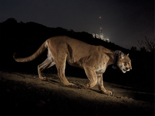 National Geographic Live presents On the Trail of Big Cats