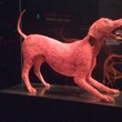 Blood vessel dog in Animal Inside Out at Perot Museum of Nature and Science