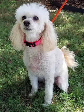 Houston, Ken Hoffman, Pethouse pet of the week, July 2017, Sadie