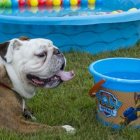 Sienna Plantation presents Canine Carnival and Fun Run