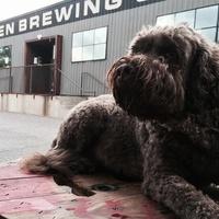 Austin Beer Garden Brewery ABGB Dog Friendly