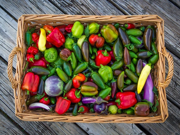 Photo of square basket with a variety of sweet and hot peppers.