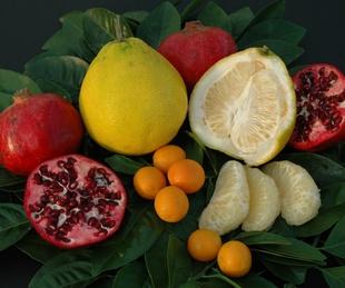 Urban Harvest's 13th Annual Fruit Tree Sale