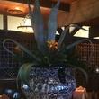 Pico's Kirby Agave urn