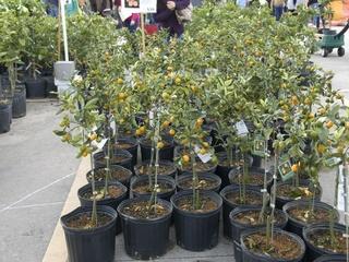 Urban Harvest's 14th Annual Fruit Tree Sale