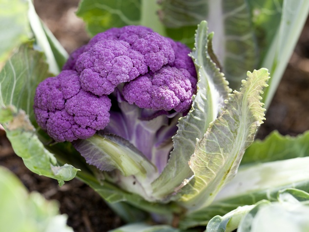 Purple cauliflower at Inn at Dos Brisas