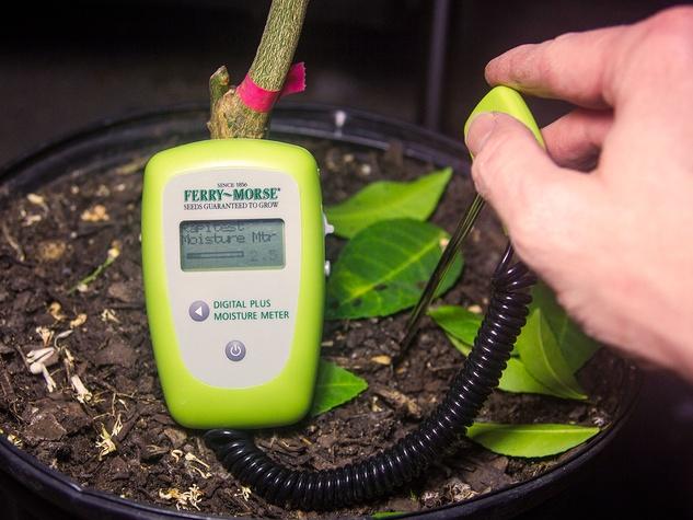 Photo of soil moisture meter