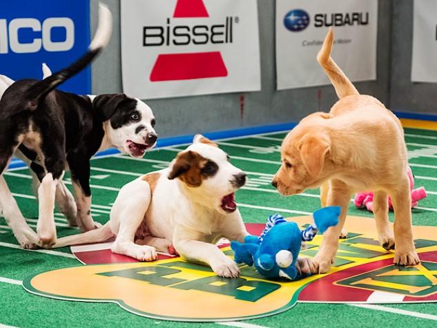 Puppy Bowl 2014