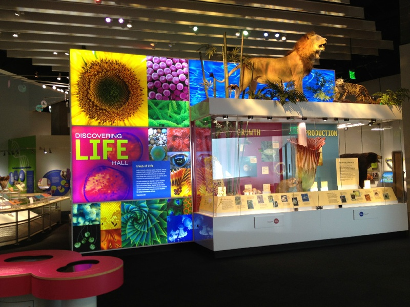 Perot Museum of Nature and Science, Discovering Life Hall