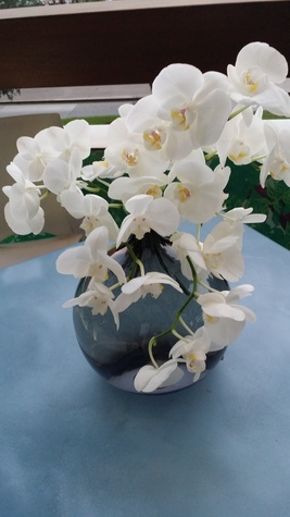 News, Shelby, orchids, August 2014