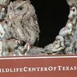 7. Eastern Screech Owl - Education Ambassador Katie Oxford Wildlife Center of Texas December 2014