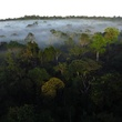 Stephen Lorenz Southern Amazon Brazil September 2013 Beautiful rainforest as far as the eye can see
