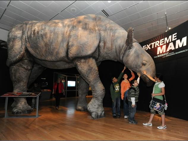 Extreme Mammals, rhino