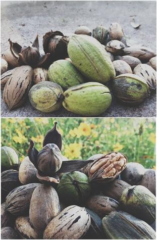 Austin Photo Set: News_layne_pecan_nov 2012_springdale farms