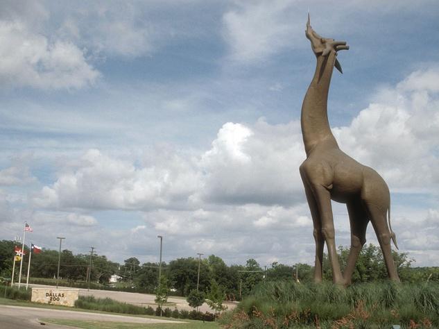 Giraffe sculpture at Dallas Zoo
