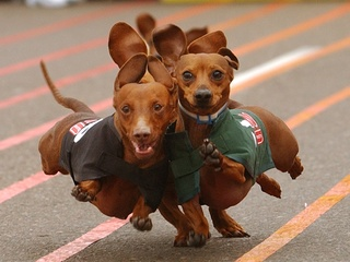 Austin Photo: Events_Wiener Dog Races_poster