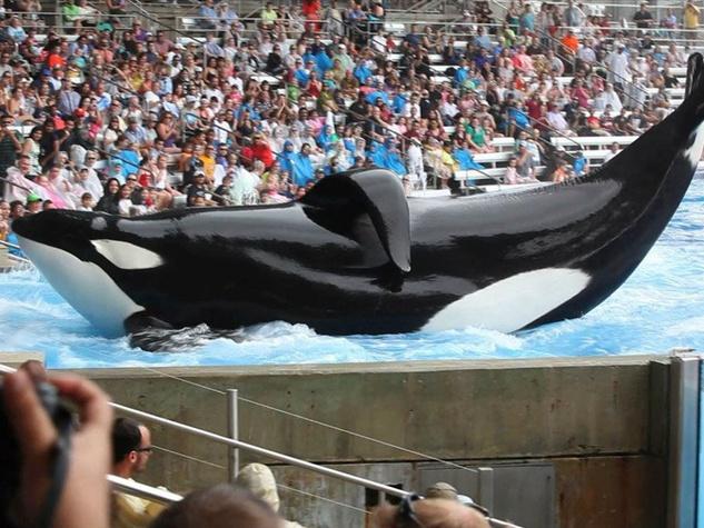 Blackfish documentary Seaworld orca