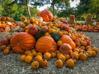 Dallas, Dallas Arboretum, Autumn at the Arboretum, Melisa Ambers, Rod Lindley