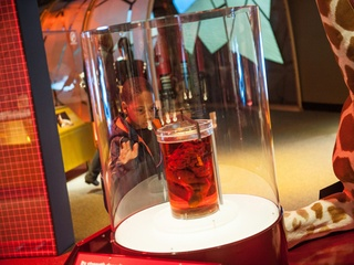 Perot Museum of Nature and Science Presents Amazing Animals Built to Survive