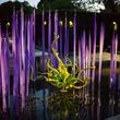 Dallas, Dallas Arboretum, Autumn at the Arboretum, Chihuly, Melisa Ambers, Rod Lindley