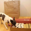Dog with Sprinkles cupcakes Dallas