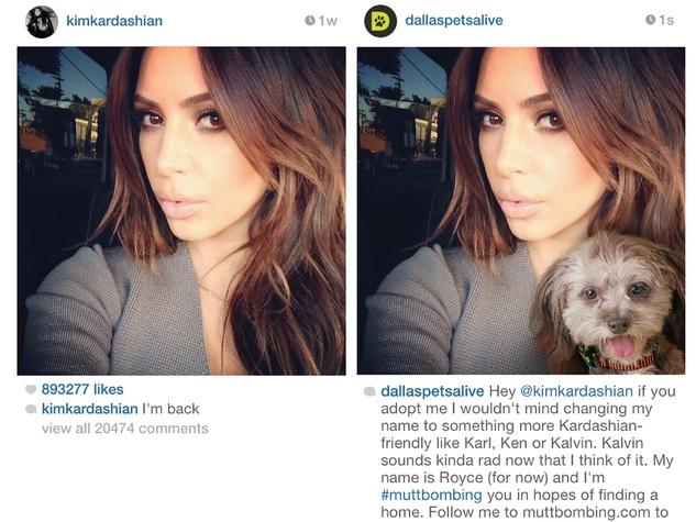 Kim Kardashian and muttbombing