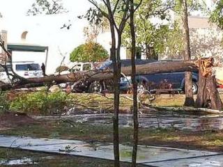 News_Humble_high winds_tree