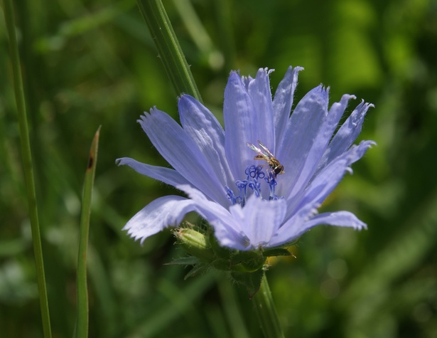Chestnut Ridge Park purple flower and bee