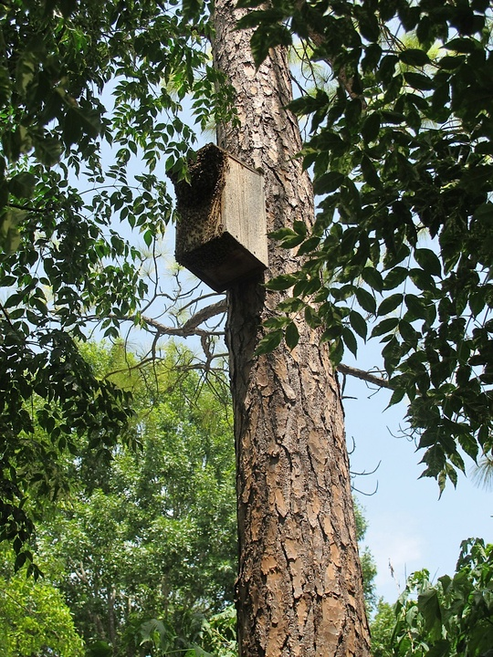 News_Katie_Patsy Cravens_Once a screech owl box now inhabited by bees