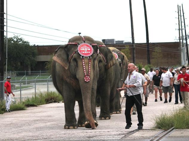 Ringling Bro. Circus, Elephants leading, July 2012