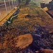 tree stumps after trees chopping down at Wendy's on Kirby Drive November 2014