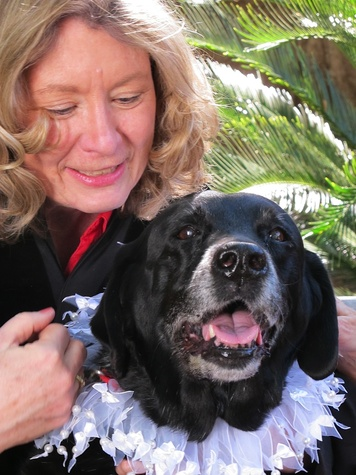 """5 Katie Oxford Blessing of the Animals at Bellaire United Methodist March 2015 Pastor Diane McGehee blessing 15 yr. old """"Dixie"""" - a Faithful Paws Therapy Dog for 13 years"""