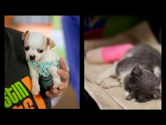 Austin Photo Set: News_caitlin_austin pets alive_feb 2013_5