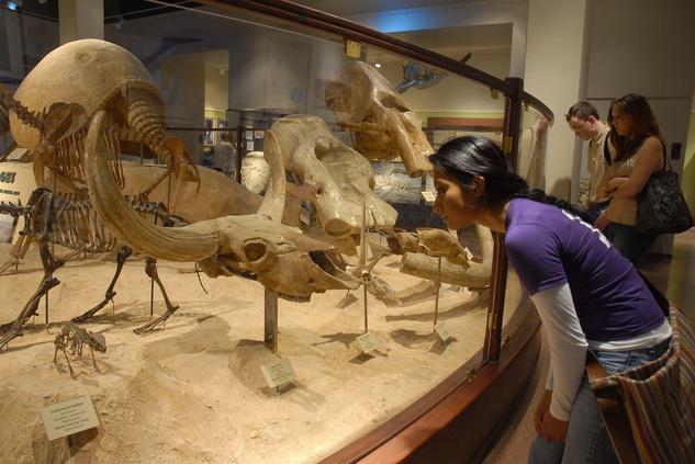 Texas Memorial Museum fossils
