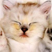 News_Amber_die_kitten