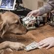 Lucky Dog Barkery